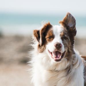 Annapolis Dog Life